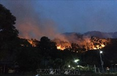 Forest fires a burning problem during dry season