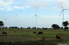 Indonesia holds potential of 442.4GW in renewable energies
