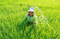 Thailand eyes green agriculture