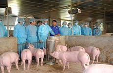 Vietnam aims to be free of African swine fever by 2025