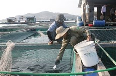 Khanh Hoa steps up application of advanced technologies in marine aquaculture