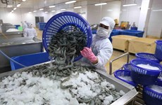 Shrimp exports up 5.7 percent in H1 despite COVID-19