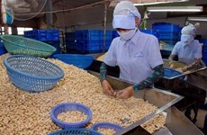 Annual cashew nut export goal lowered to 3.2 billion USD
