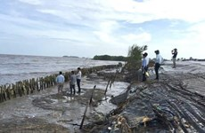 Ca Mau reports serious erosion in western sea dyke