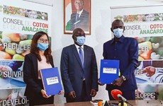 T&T Group purchases Ivory Coast's entire stock of raw cashew nuts