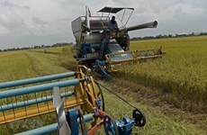 Thailand adjusts rice strategy to improve competitiveness