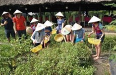 Phu Quoc promotes eco-agriculture in combination with tourism