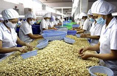 Export turnover of main agricultural products down significantly