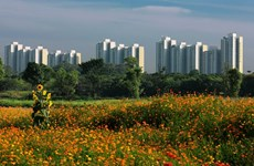 More regulations for developing green cities