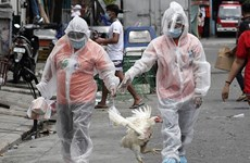 Philippines bans chicken imports from Brazil over COVID-19 scare