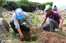 Ninh Thuan promotes measures to expand forest coverage