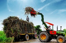 Vietnam promotes measures to manage local sugar market