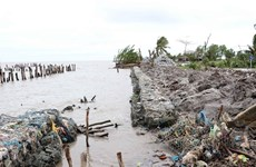 Western sea dyke in Ca Mau, Kien Giang needs urgent protection