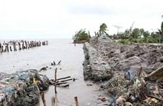 Western sea dyke in Ca Mau, Kien Giang needs urgent protection