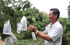 Mekong Delta's fruit farming area to be expanded