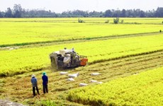 Rice exporters urged to promote brand through safe production