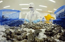 RoK increases import of Vietnam's shrimps