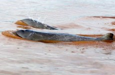 Cambodia to seek UNESCO recognition for dolphin areas