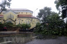Storm Noul makes landfall in Thua Thien-Hue