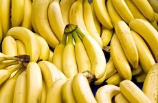 Philippines may lose in banana export race