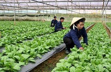 Hanoi's agriculture set to grow at least 3 percent in 2021