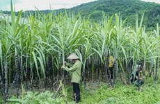 Vietnam initiates anti-dumping investigation on sugar imported from Thailand
