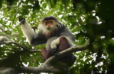 Da Nang approves biodiversity conservation master plan