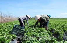 Vietnam, Netherlands seek to boost trading in fruits, vegetables