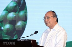 PM: Domestic macadamia sector needs strategy
