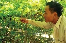 Quang Ngai farmers go organic