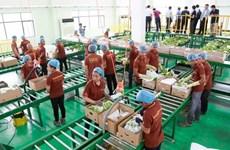 Cambodia's banana exports surge thanks to increasing demand from China