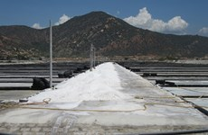 Ninh Thuan to become country's top salt producer