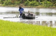 Thailand sees opportunities to boost rice exports to EU
