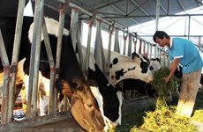 Husbandry to undergo modernisation