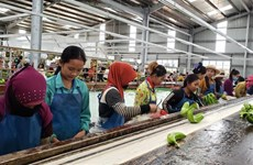 Agricultural projects create stable employment for Vietnamese-Cambodians