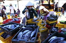 Workshop seeks ways to promote tuna exports to EU