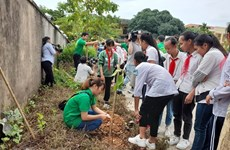 Campaign to green up Hanoi with 4,000 trees