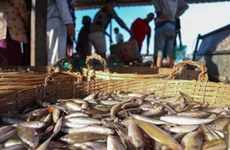 Cambodia's fisheries export slump by over 84 pct
