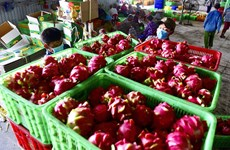 EVFTA helps boost Vietnam's agricultural exports to EU