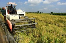 Rice exports drop in volume but still rise in value