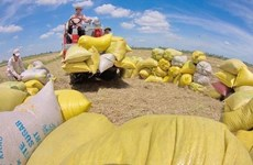 Opportunity for Vietnam to export rice to Australia