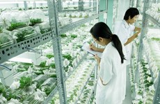 Thai Nguyen eyes stronger hi-tech agriculture cooperation with Israel