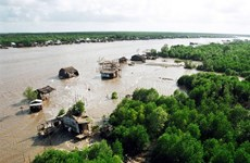 HSBC, WWF Vietnam join hands to recover submerged forests