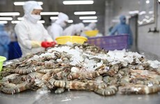 Minh Phu opposes US anti-dumping duty on frozen shrimp