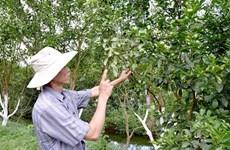 Dong Thap preserves endangered pink mandarin