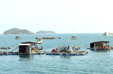 Vietnam seeks sustainable development of fisheries