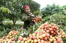 Agriculture sector works towards reaching 40 bln USD export target