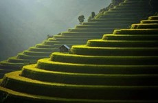 Mu Cang Chai among world's 50 most beautiful places