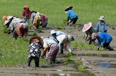 Indonesia: Agriculture only sector to post growth in 3rd quarter