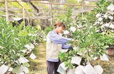 Hanoi's agriculture strives to achieve growth target